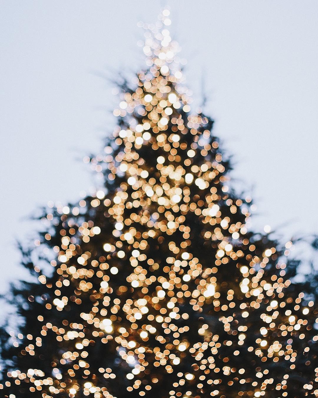 albero di natale | Caro Babbo Natale | A Gipsy in the Kitchen
