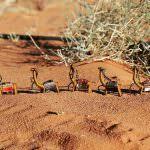 caravan di cammelli Tribalogy | Ricucire il filo del destino, Tribalogy | A Gipsy in the Kitchen