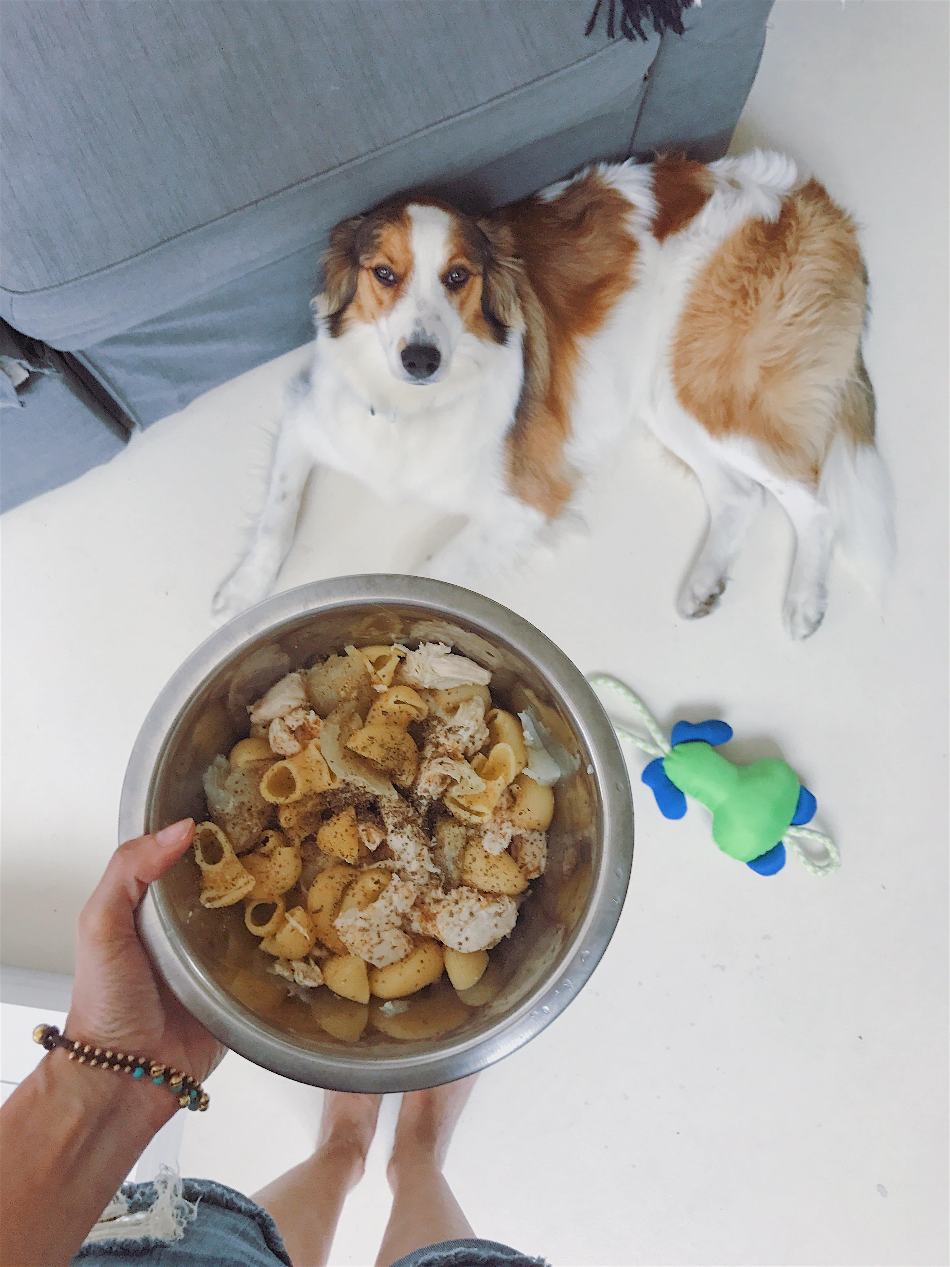 brie | I mai più senza delle fur mamas | A Gipsy in the Kitchen